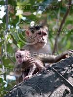 Monkey_9.jpg