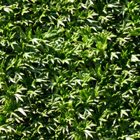 Plants001