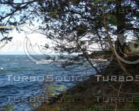Treeshot.jpg