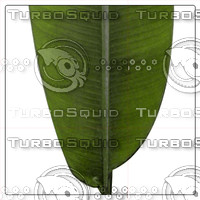 BANANA PALM LEAF 01