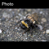 Insect: Bee 2