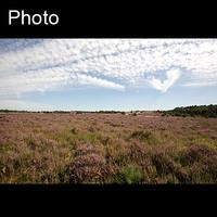 Dutch landscape 11