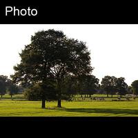 Dutch landscape 7