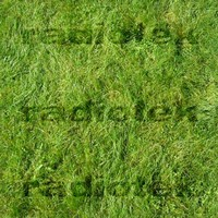 Eight Seamless Grass Textures