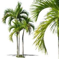 tropical34