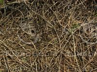 twigs1.jpg