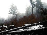 forest_III.jpg
