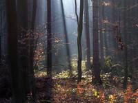 forest_II.jpg