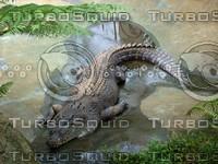 Crocodile_1.jpg