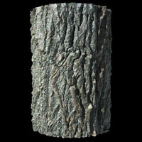 Ashen Bark