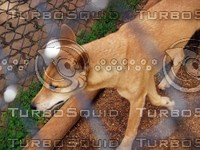 Dog_3.jpg