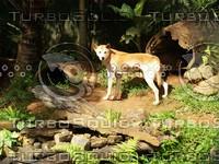 Dog_7.jpg