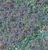 Grass004