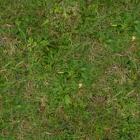 Grass023