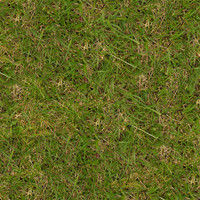 Grass031
