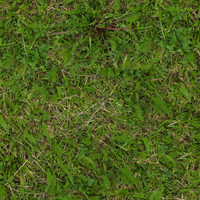 Grass033