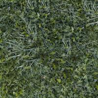 Grass043