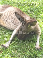 Kangaroo_1.jpg