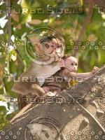 Monkey_10.jpg