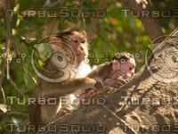 Monkey_11.jpg