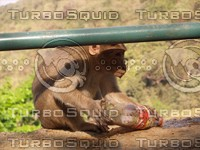 Monkey_19.jpg