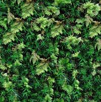 Plants019