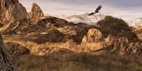 Bald Eagle in the Colorado Rockies