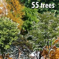 55 trees