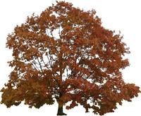 autumn005.jpg