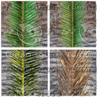 COCOS PALM COMPLETE SET