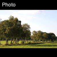 Dutch landscape 3