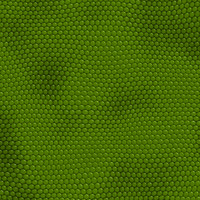 iguana skin.jpg