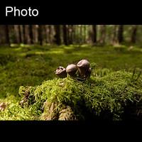 Mushroom 12