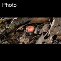 Mushroom 7