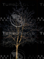 tree48