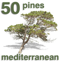 Cut Out - 50 Pines & Juniper