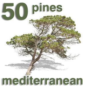 Cut Out - 50 Pines & Juniper