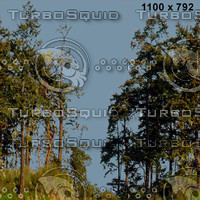 tex treewall 25b