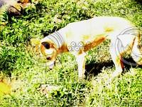 Dog_4.jpg
