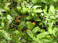 Foliage 39 - Tileable