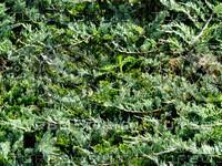 Foliage 49 - Tileable