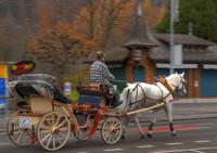 INTERLAKEN HORSE CARRIAGE TS
