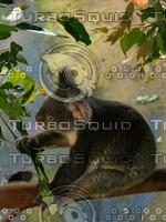Koala_Bear_20.jpg