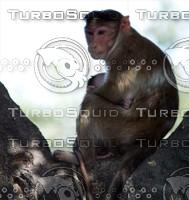 Monkey_3.jpg