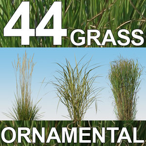 44 Ornamental Grass Textures