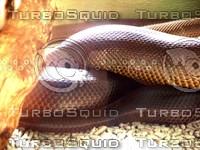 Snake_5.jpg