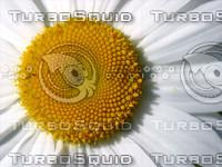 Flower photo #2