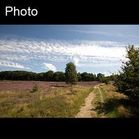 Dutch landscape 9