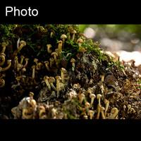 Mushroom 3