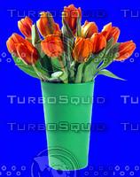 plant_005.jpg